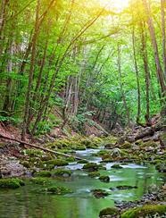 Sustainability Beautiful Stream